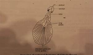 Where Is The Cliturous Located Diagram