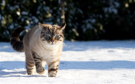 Cute Winter Animal Wallpapers - Top Free Cute Winter ...