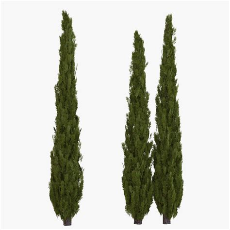 tuscan tree types pictures of italian cypress tree hardcore sex pictuers