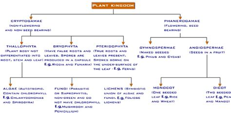 plant order the universal order of plants by form and function viral infections blog articles