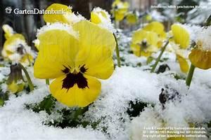 Garten Im März : garten im m rz was bl ht im m rz aktuelle bilder ~ Lizthompson.info Haus und Dekorationen