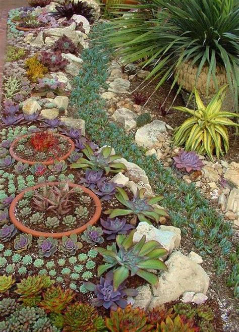 25 best ideas about succulent rock garden on