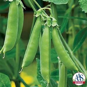 FafardYes, Peas! Growing Edible Pod & Tendril Peas