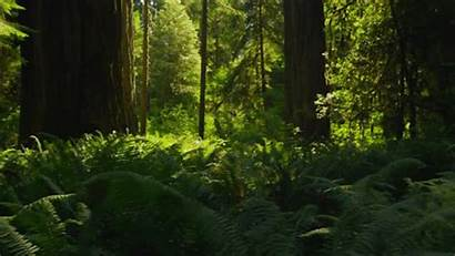 Aesthetic Forest Nature Woodlands Aesthetics Natural Beauty