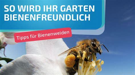 welche pflanzen mö bienen nicht welche pflanzen m 246 bienen tipps f 252 r bienenweiden und co bayern 1 radio br de