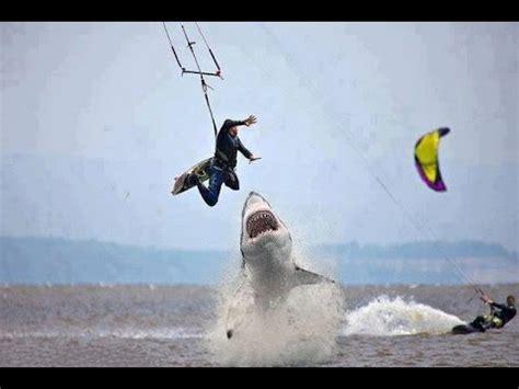 great white shark attack gopro hero black fps