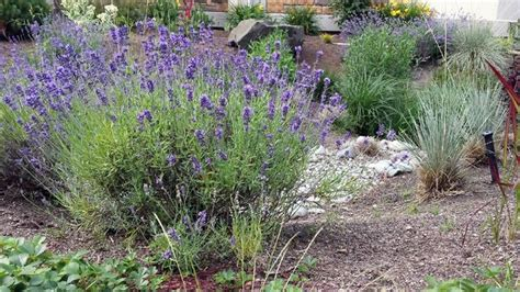 best plants for xeriscaping 17 best images about xeriscaping on pinterest window boxes hosta gardens and water features