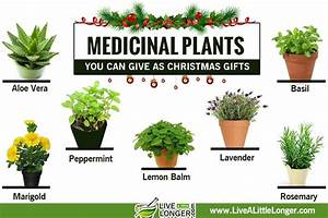 Medicinal, Plants, You, Can, Give, As, Christmas, Gifts