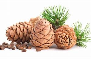 Кедровые орехи для лечения диабета