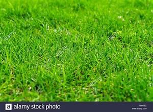Frisch Gesäten Rasen Düngen : frische saftige fr hjahr rasen konzept der gr nen f r alle gelegenheiten f r moderne nat rliche ~ Yasmunasinghe.com Haus und Dekorationen