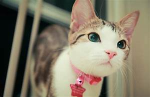 Really cute cat images - CuteImages.net