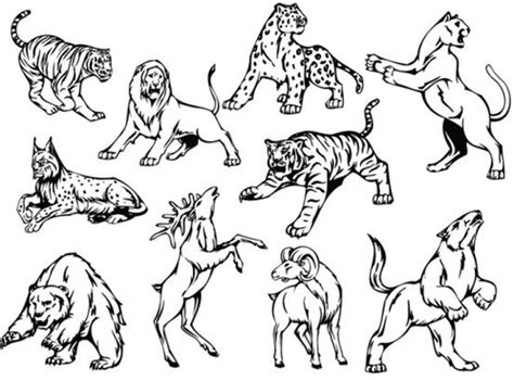 wild animal drawings  vector