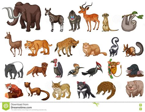 Different Type Of Wild Animals On White Stock Vector