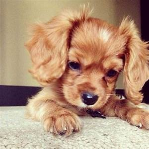Cute dog pictures! | Cute animal pictures and videos blog