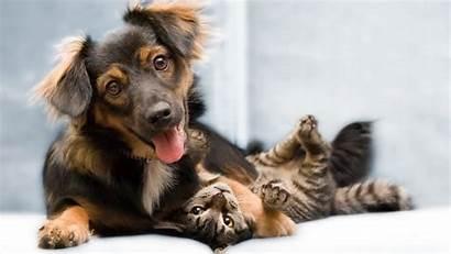 Animal Desktop Funny Backgrounds Dog Cat Friends