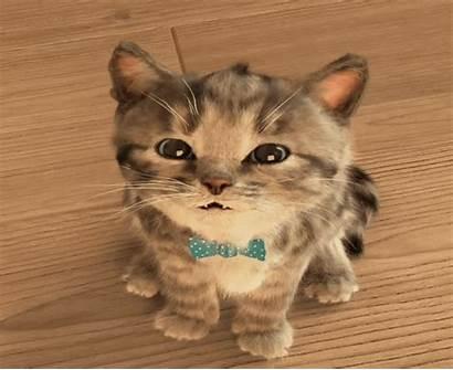 Cat Gifs Animated Gfycat Awesome Kitten Kitty