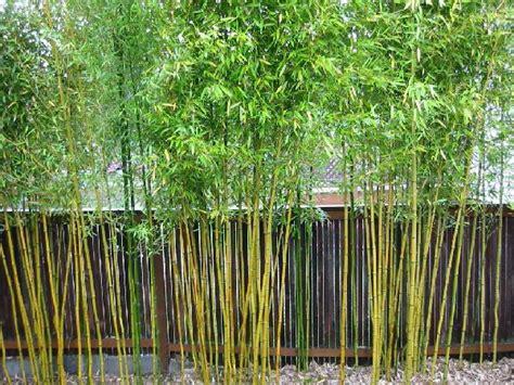 garten sichtschutz bambus der bambus garten kann einem den atem rauben archzine net