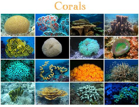coral corals quiz animals