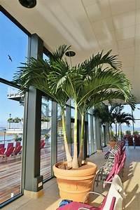Palmen Kaufen Baumarkt : palmen kaufen online palmenshop tropisch mediterran exotisch 2 12m ~ Orissabook.com Haus und Dekorationen