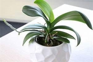 Orchideen übertopf Glas : orchideen der richtige bertopf so sieht der ideale orchideentopf aus ~ Eleganceandgraceweddings.com Haus und Dekorationen