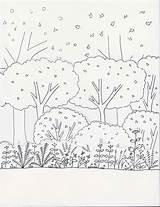 Shrubs Drawing Getdrawings sketch template