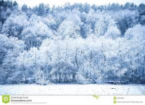 winter forest stock images image 35878604