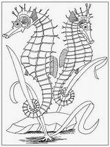 Coloring Pages Realistic Adult Seahorse Adults Horse Sea Printable Drawing Ocean Colouring Realisticcoloringpages Seashore Horses Sheets Outline Drawings Popular Seahorses sketch template
