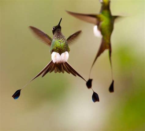 hummingbird legs hummingbirds in memory of my mother