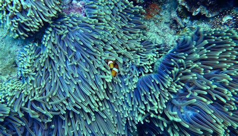 Incredible Coral Reef Facts You Need to Know - Our Global Climate