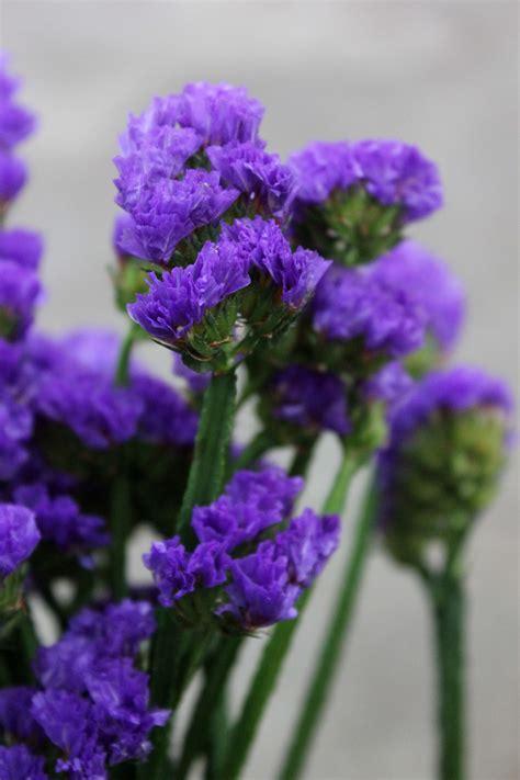 statice stevens  son wholesale florist