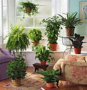 Fern decor for room windows facing north and interiors for Interior decorating with indoor plants