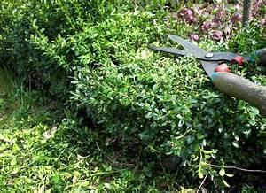Buxbaum Schneiden Wann : buchsbaum schneiden 03 starker r ckschnitt im april ~ Lizthompson.info Haus und Dekorationen