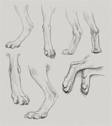 hands  feet images  pinterest monkey