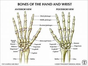 13 Best Arm Bones Images On Pinterest
