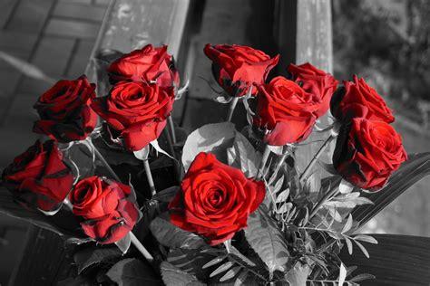 Rote Rosen Im Schwarz Weiß Foto & Bild