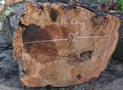 large walnut log  bf salvaging