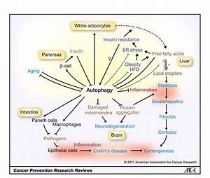 Role Of Autophagy In Cancer Prevention