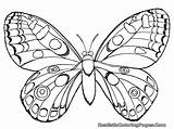 Coloring Insect Pages Realistic Butterfly Printable Children sketch template