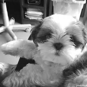 Cute Black and White Dog