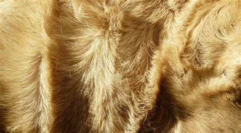 all you need to know about dog hair shedding barkily