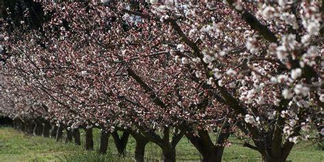 chambre d agriculture du roussillon abricots rouges du roussillon en route vers l 39 aop l
