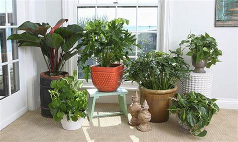 Houseplants, Green Air Filters And Bright Accents For