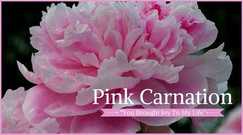 carnation color meanings 10 best funeral flowers ultimate guide lives on