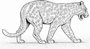 Dessin Jaguar Facile : desenhos de leopardos para imprimir e colorir animais para colorir ~ Maxctalentgroup.com Avis de Voitures