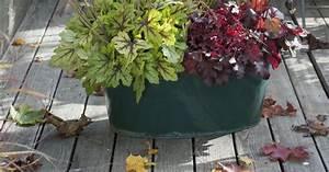 Ziergräser Im Topf : k belbepflanzungen mit ziergr sern und bl tenpflanzen mein sch ner garten ~ Watch28wear.com Haus und Dekorationen