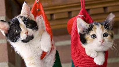 Cat Christmas Wallpapers Xmas