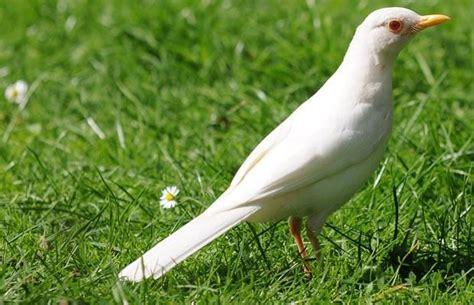 white  albino animals images  pinterest