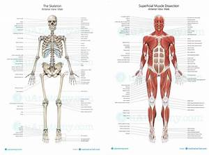 Welcome To Ms  Stephens U0026 39  Anatomy And Physiology And