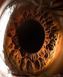 See INCREDIBLE close-up photos of the human eye (LOOK ...