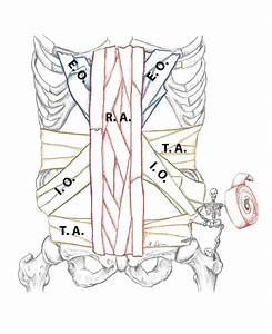Understanding And Training Core Abdominal Muscles